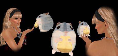 dlab-hamster-copy